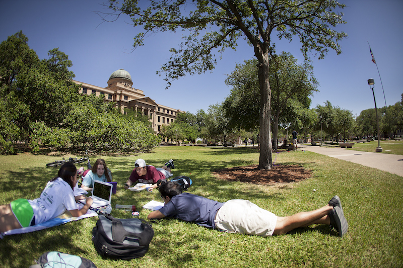 students under tree on campus